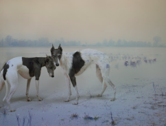 Rory Carnegie 'Dolly and Nora' Port Meadow Dogs Series 2013